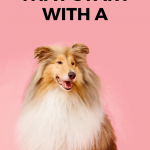 500 Female Dog Names That Start With A