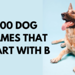 500 Dog Names That Start With B