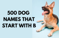 Dog Names That Start With B
