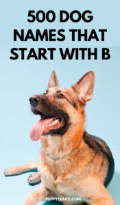 Dog Names That Begin With The Letter B
