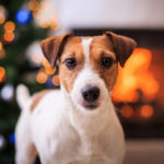 5 Simple Ways to Treat Your Dog This Holiday