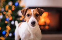 How to treat your dog this holiday